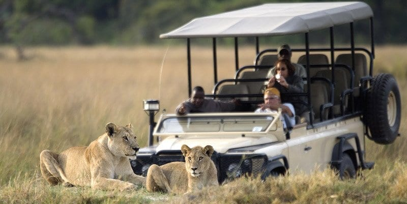 Wilderness Game Drive