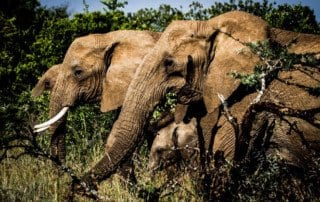 Elephants Wilderness' Segera