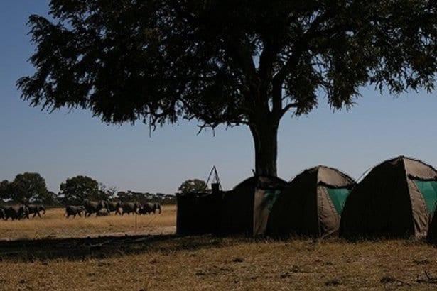 guests_tents