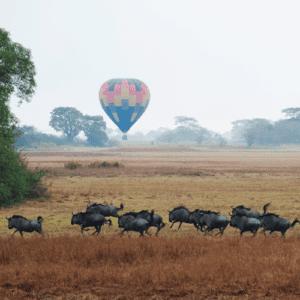 Kafue| Luxury Zambia Safari