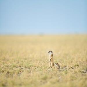 Central Kalahari |