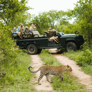 Kruger National Park | South Africa Highlights