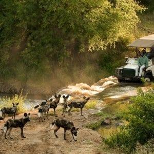 Madikwe | South Africa Highlights