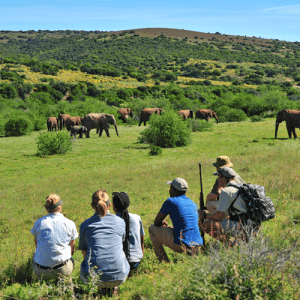 Eastern Cape | South Africa Highlights